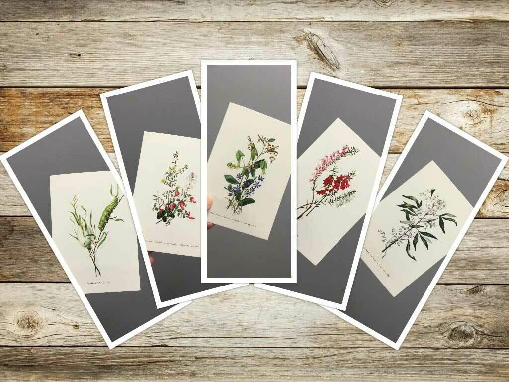 Eliza Blythe Set of 5 Greeting Cards  No. 1