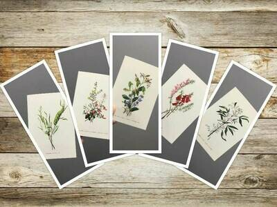 1st Set Eliza Blyth Mixed Pack of Greeting Cards