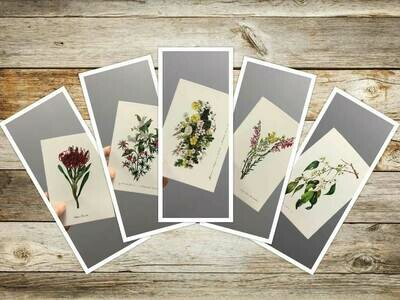 3rd Set Eliza Blyth Mixed Pack of Greeting Cards
