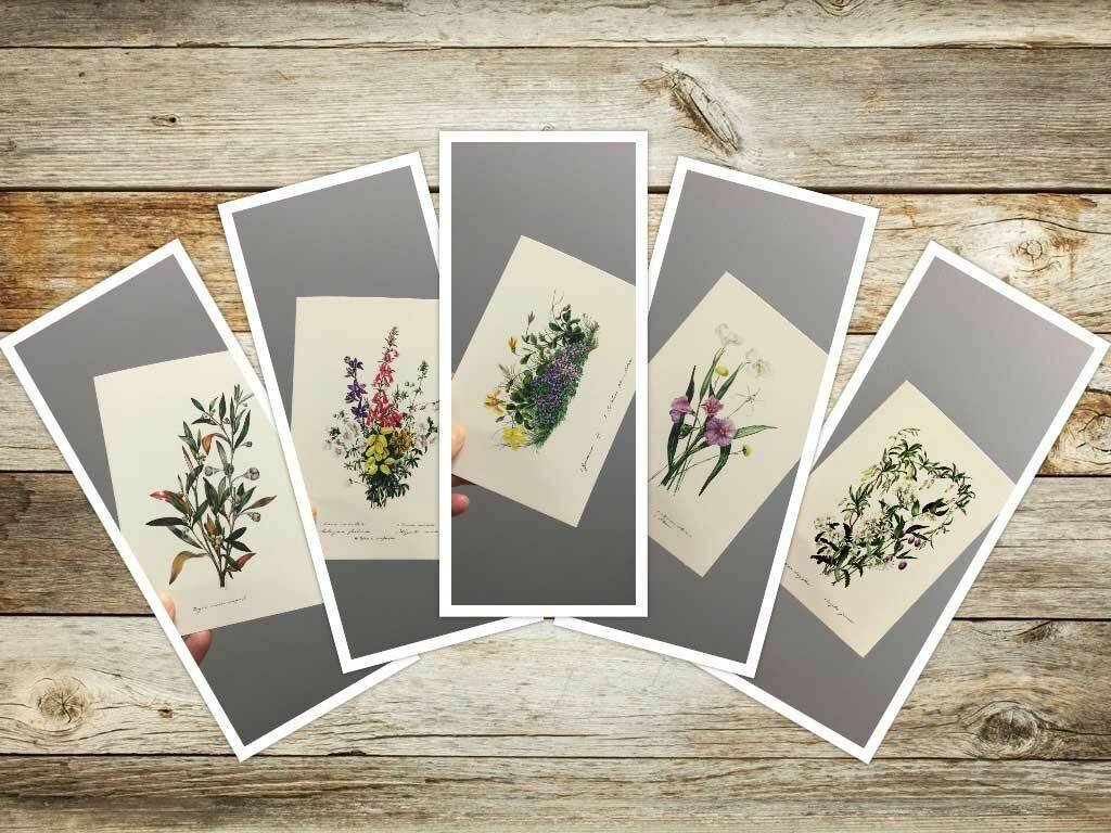2nd Set Eliza Blyth Mixed Pack of Greeting Cards