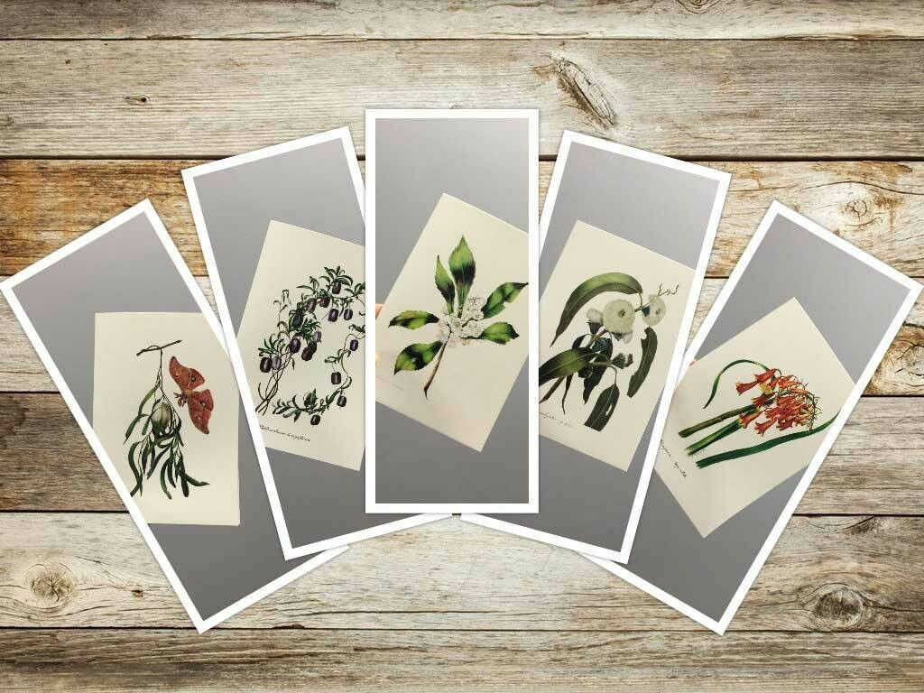 Eliza Blyth Set of 5 Greeting Cards  No. 4