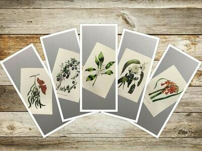 4th Set Eliza Blyth Mixed Pack of Greeting Cards