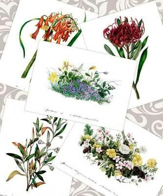 Eliza Blyth A5 ART Prints