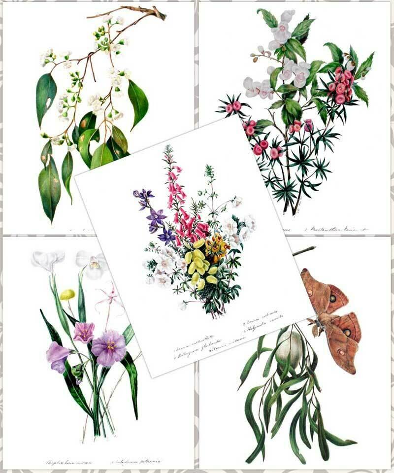 Eliza Blyth A3 Prints