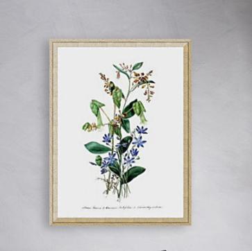 Eliza Blyth A4 ART Prints