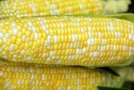 Corn - Seed