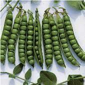 Peas - Seed
