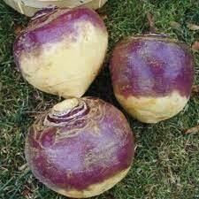 Turnip - Seed