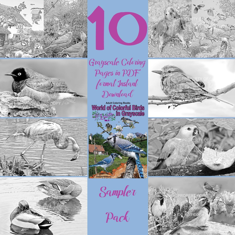 Colorful Birds Sampler Pack Digital Download
