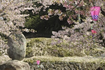 Printemps Japonais