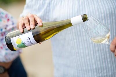 Weinwerk X Weingut Stenner | Online Weinprobe | 07.05.2021