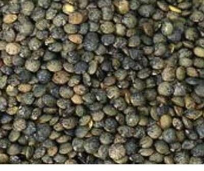 Organic Green Puy Lentils