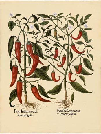 Poster- Botanical Maxi
