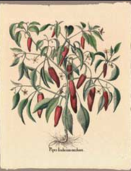 Poster- Botanical Mini