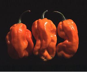 NuMex Suave Orange