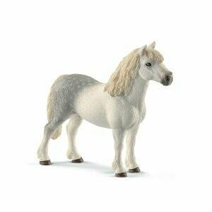 Pony-Welsh hongre