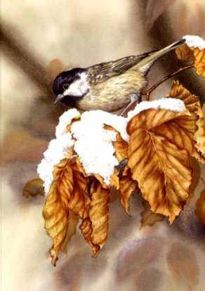 Coal Tit and Beech Leaves