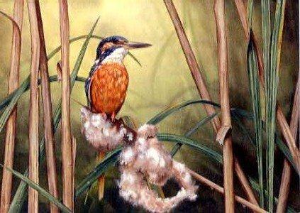 Kingfisher in Bulrush