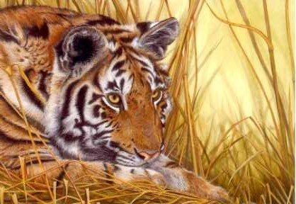 Tiger and Grasses