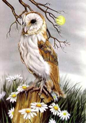 Barn Owl and Ox-eye Daisies