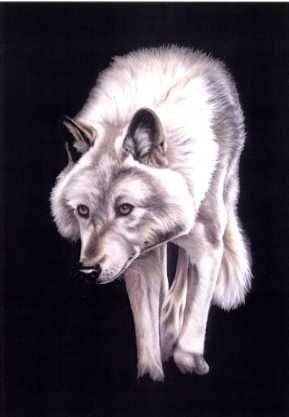 From the Darkness - Wolf