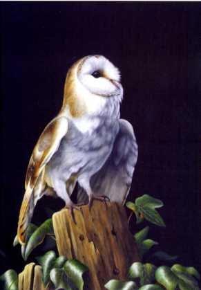 Moonlit Barn Owl