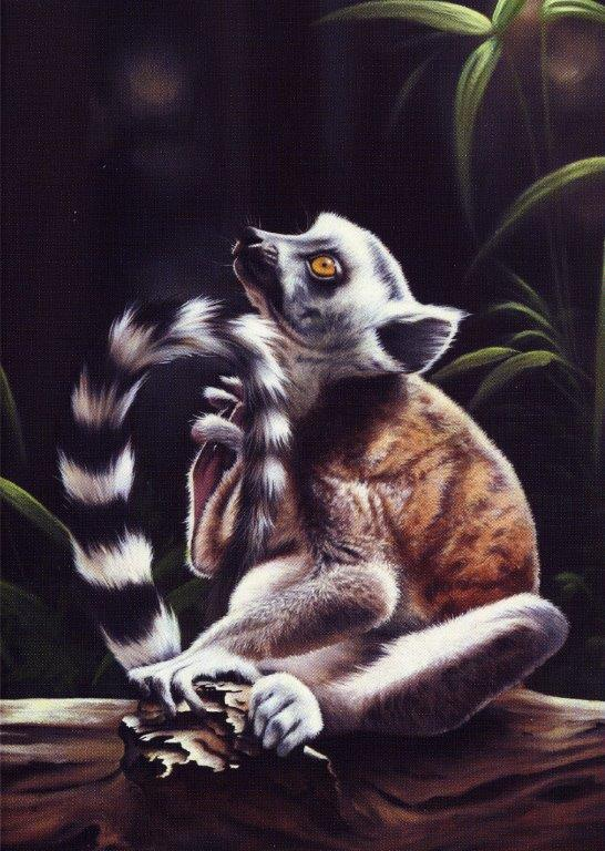 Young Lemur