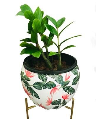 ZZ Plant in Metal Flower Round Pot