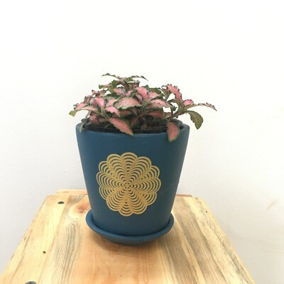 Fittonia in Terracotta - Blue Printed Series -Single Cup pot with Saucer