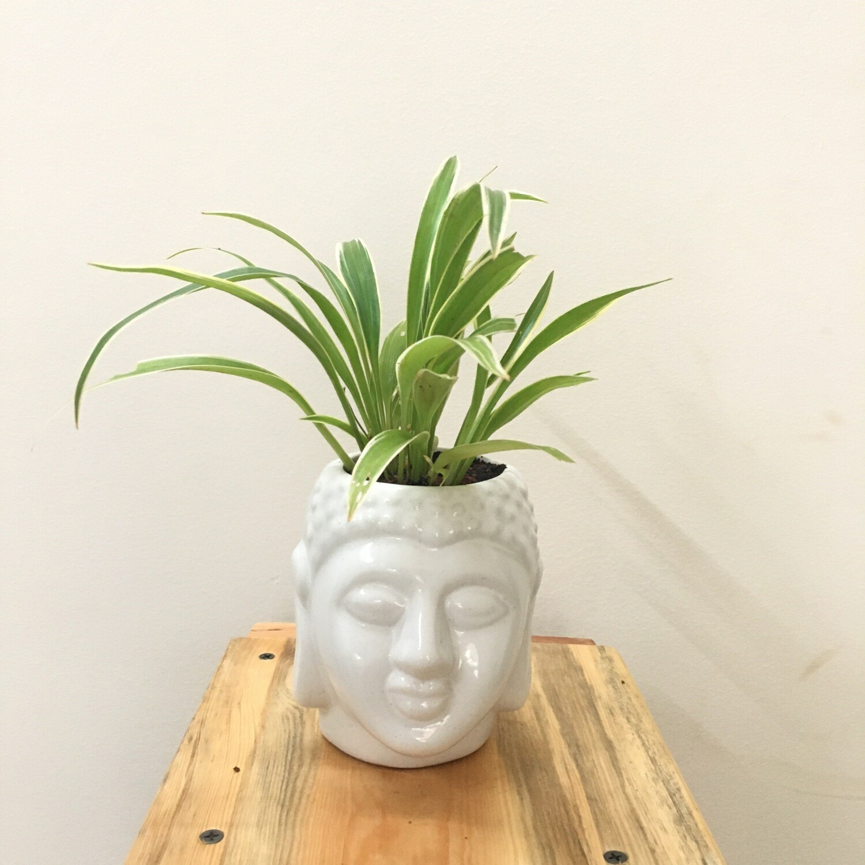 "3"" Budha Pot"