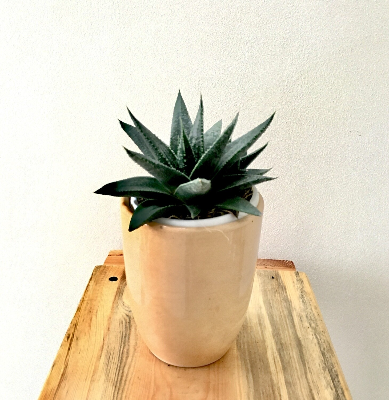 "Aloe Tiki Succulent in 3.5"" Coffee Cup"