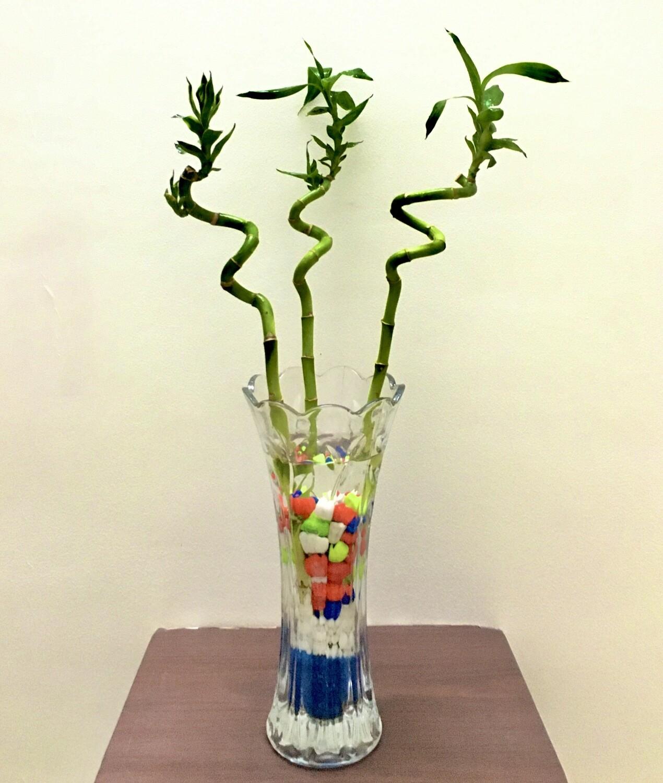 Spiral Bamboos- 2 Feet Long in Glass Vas