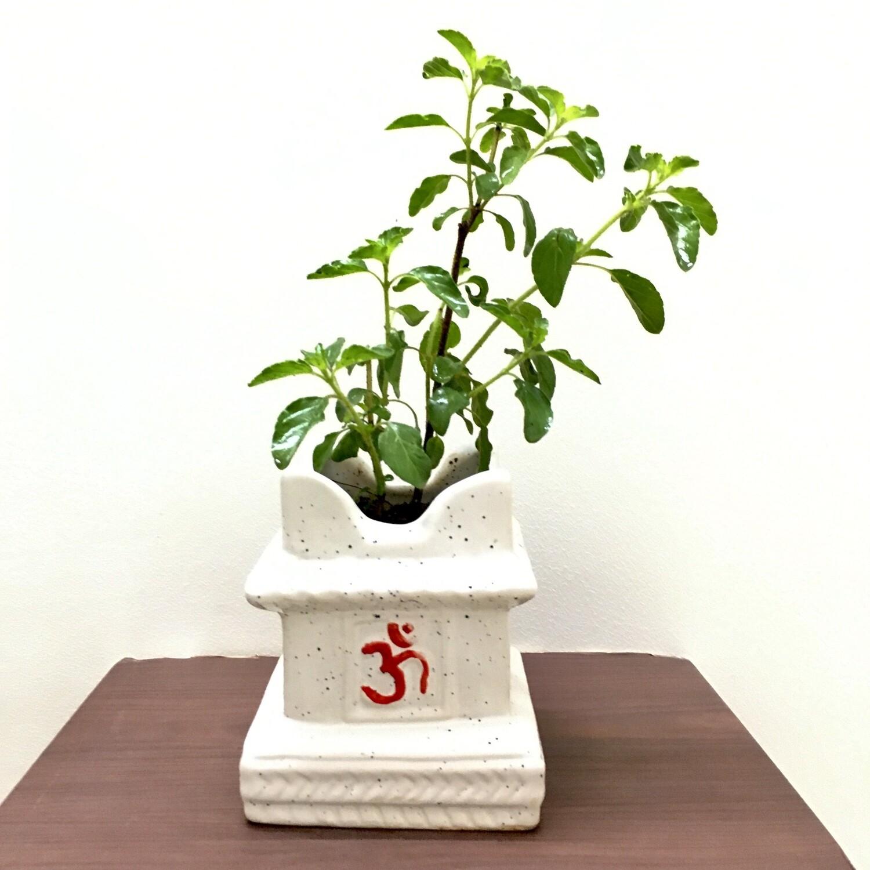"Tulsi Plant in 4"" Swastik Ceramic Pot Small"