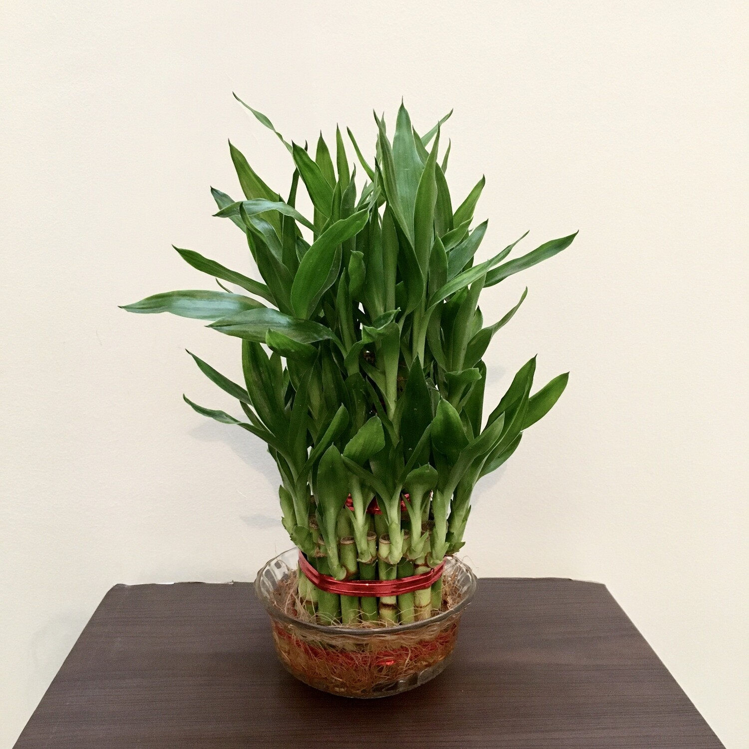3 Layers Lucky Bamboo in Glass Bowl