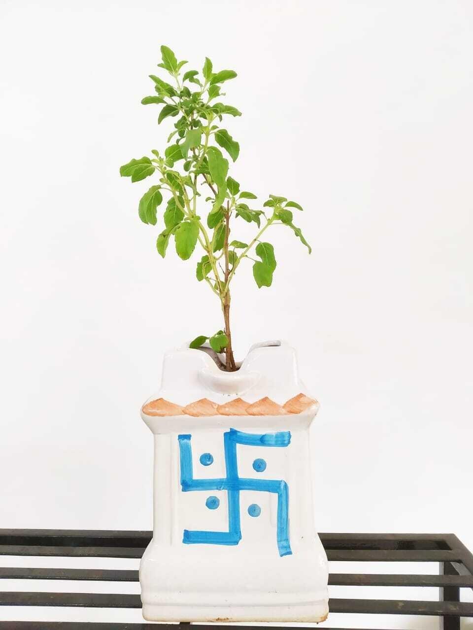 "Tulsi Plant in Swastik Ceramic 6"" Pot"