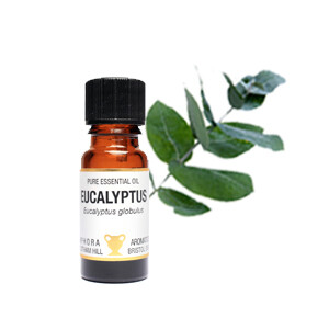 Eucalyptus - Eucalyptus globula.  10 ml Pure Essential Oil