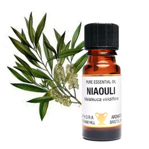 Niaouli - Melaleuca viridiflora.  10 ml Pure Essential Oil