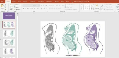 Cross-sections of pregnant and non-pregnant bodies incl. twin pregnancy- PowerPoint Presentation