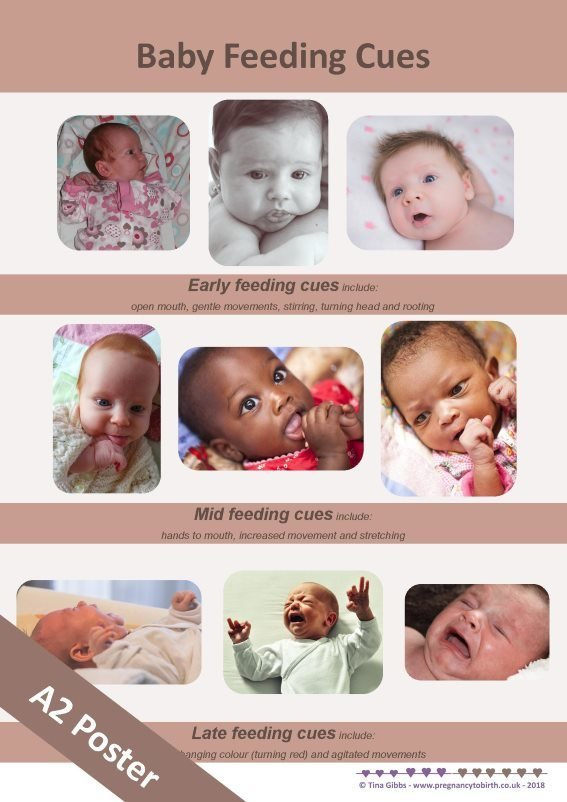 Baby Feeding Cues - A2 poster incl. pdf handout