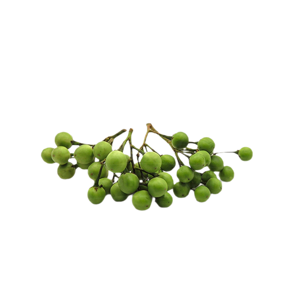 Turkey berry | มะเขือพวง