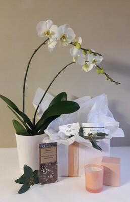 Phalaenopsis Orchid Gift Box