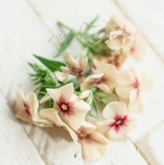 Edible/Decorative Flowers