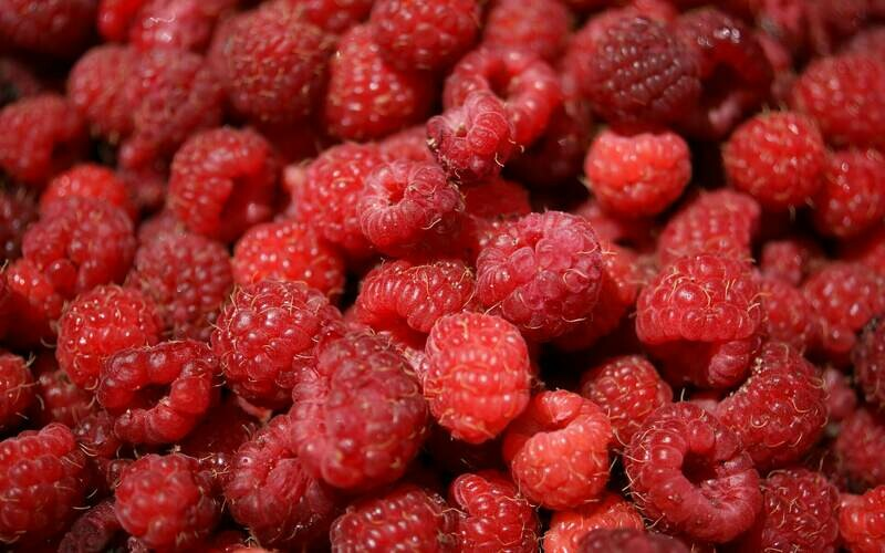 Red Bounty Raspberry