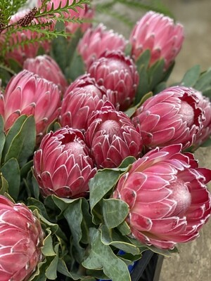 EXOTIC PROTEA Workshop on 11/4/2020