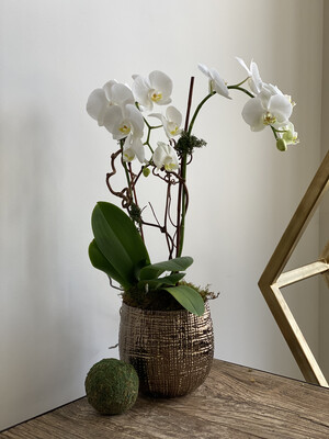 2 Stem White Orchid