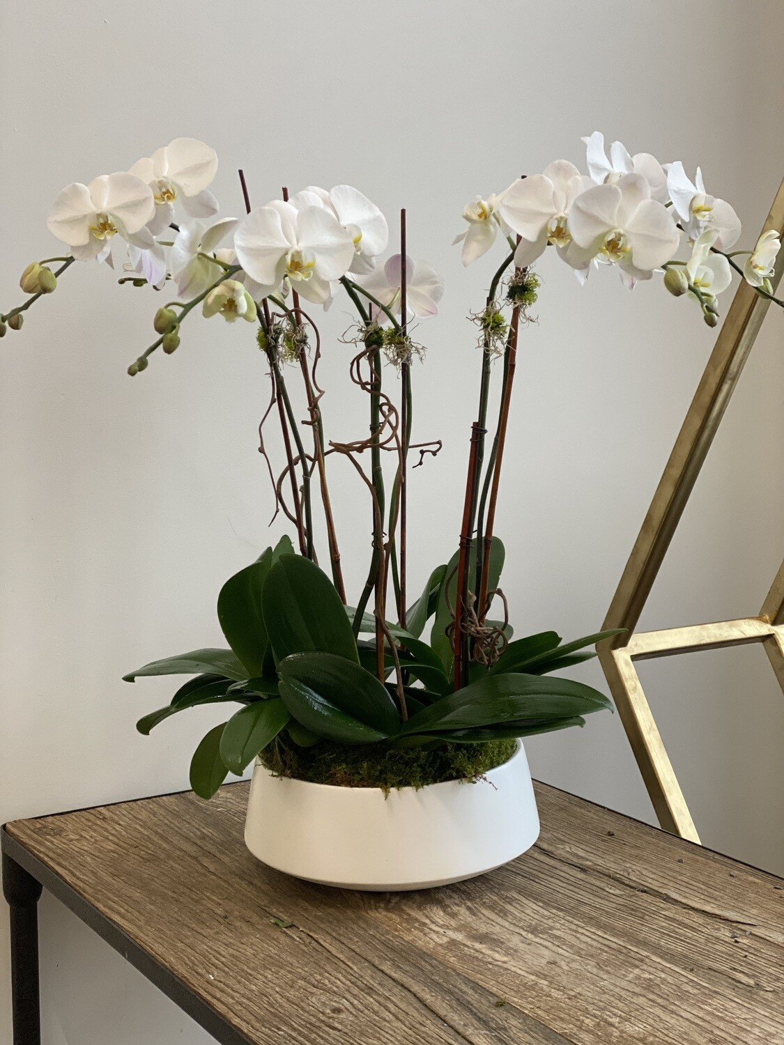 6 Stem White Orchid