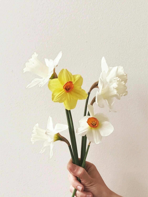 BULB FLOWERS ON 3/17/2021