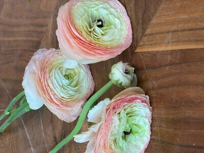 RANUNCULUS  ON 2/17/2021