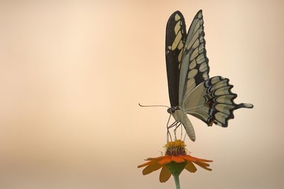 Butterfly Hypnotherapy