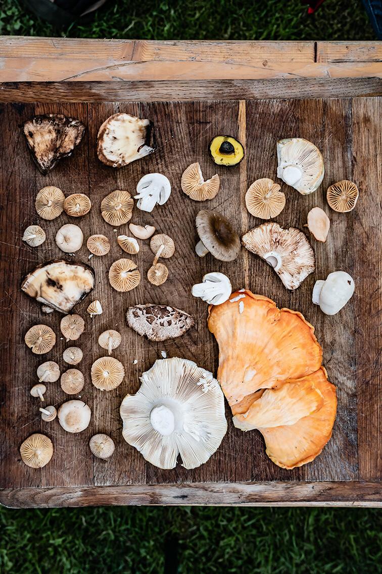 Cursus (eetbare) paddenstoelen